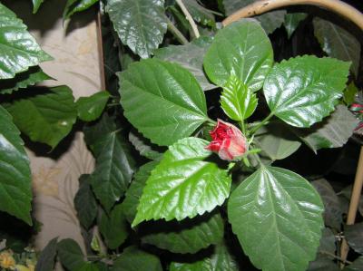 Цветы домашние и их названия с фото