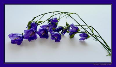 Декоративный колокольчик цветок