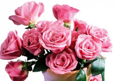 Купить цветы в днепре недорого